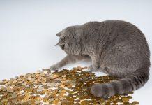 5 najbohatších reálnych zvierat na svete